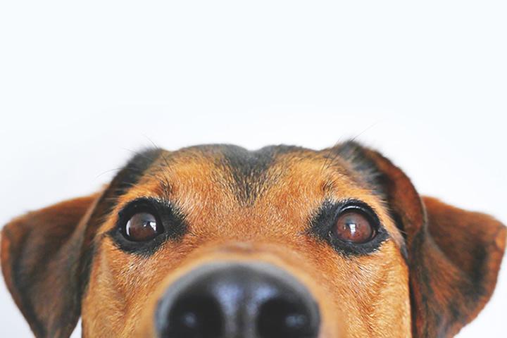 Long Haul Truckers Should Consider Pets